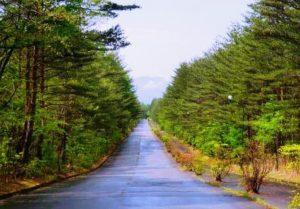 浅間高原別荘地入口に続く舗装路
