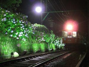 ライトアップされた夜のあじさい電車