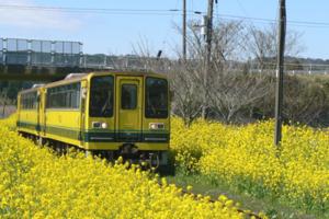 いすみ鉄道菜の花路線(城見ヶ丘)