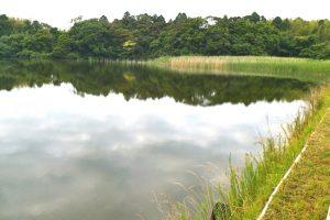 トンボの沼