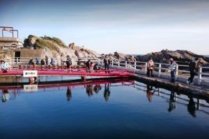 太海フラワー磯釣りセンターの釣り堀