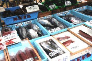 漁港で水揚げされた直後の魚介類