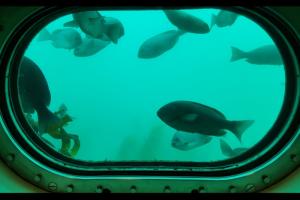 魚群の生態を目の前で楽しめる