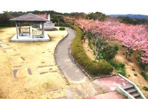 春には河津桜が咲き誇る