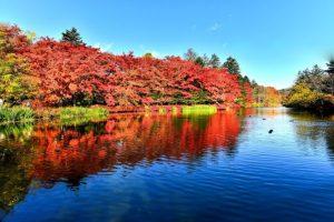 紅葉も鮮やかな雲場池