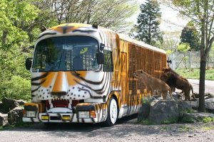 金網越しに間近に迫るライオンバス