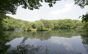 温泉別荘村の区画内を流れる白戸川散策路沿いの池