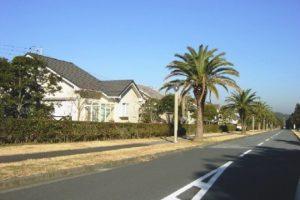 別荘地横の通りのヤシ並木