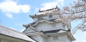 大多喜城と桜 (県立中央博物館大多喜城分館)
