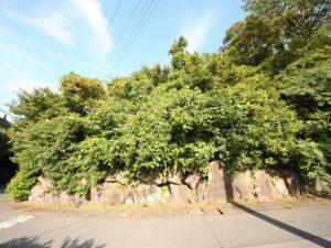 事例5(静岡・伊東市4)