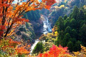 紅葉が鮮やかな養老渓谷