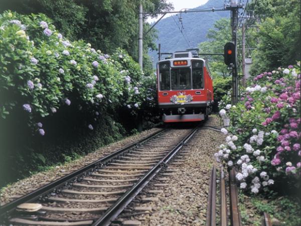 箱根登山鉄道のあじさい電車