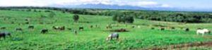 帯広・十勝平原の牧歌的景観