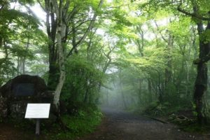 2. 霧に包まれた朝の山道