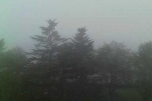 3. 霧でかすむ公園の木立