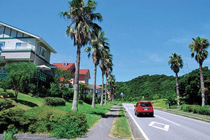 別荘地に接するシュロ並木の通り