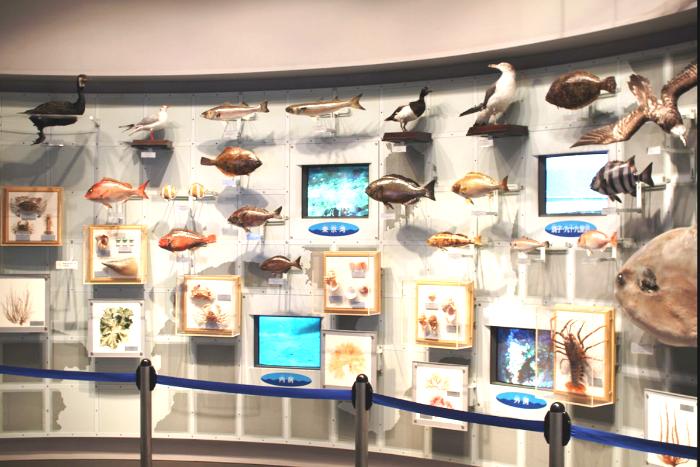 地元の魚の標本が多い展示ルーム