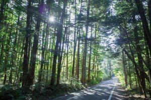 南ヶ丘地区の別荘地並木