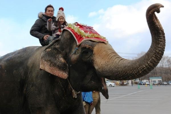 親子で一緒に象の背中でご満悦