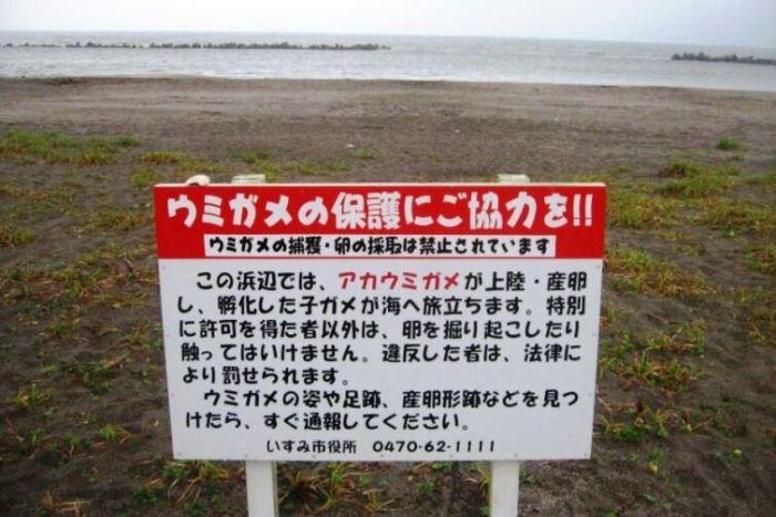 ウミガメ保護を訴えたガイド表示